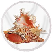 Natural Shell Collection On White Round Beach Towel