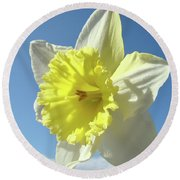 Nature Daffodil Flowers Art Prints Spring Nature Art Round Beach Towel