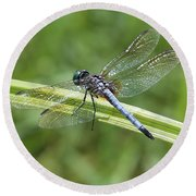 Nature Macro - Blue Dragonfly Round Beach Towel