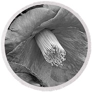 Nature's Beauty In Black And White Round Beach Towel