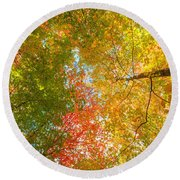 Natures Canopy Of Color Round Beach Towel