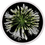 Natures Fireworks - Lily Of The Nile 005 Round Beach Towel