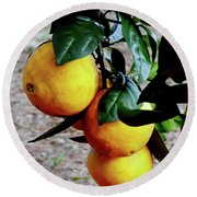 Naval Oranges On The Tree Round Beach Towel