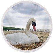 Nesting Mute Swan At Abbotsbury Round Beach Towel