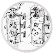 Neuroglia Cells Illustrated By Cajal Round Beach Towel by Science Source