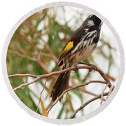 New Holland Honey-eater Round Beach Towel