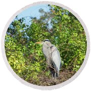 New Nest For Great Blue Heron Round Beach Towel