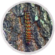 New Orleans Buck Moth Caterpillar Round Beach Towel