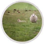 New Zealand Sheep Round Beach Towel