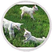 Newborn Goats Round Beach Towel