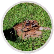 Newborn Red Deer Round Beach Towel