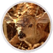 Newly Born Fawn Hiding In A Saskatchewan Field Round Beach Towel