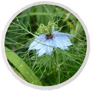 Nigella In Spring Rain Round Beach Towel