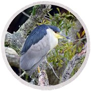 Night Heron Round Beach Towel