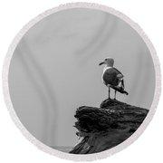 Gull On Driftwood Bw Round Beach Towel