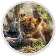 Lion Cub Lick Round Beach Towel