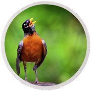 North American Robin In Song Round Beach Towel