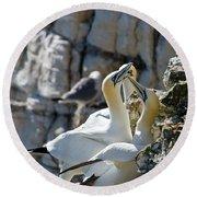 North Atlantic Gannets Round Beach Towel