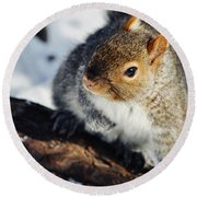 North Pond Squirrel Round Beach Towel