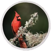 Northern Cardinal In Repose Round Beach Towel