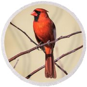 Northern Cardinal Profile Round Beach Towel