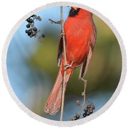 Northern Cardinal With Berry Round Beach Towel