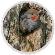 Northern Flicker Pokes His Head Out Round Beach Towel