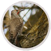 Northern Flicker Woodpecker 1 Round Beach Towel