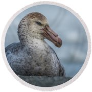 Northern Giant Petrel Sitting On Sandy Beach Round Beach Towel