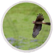 Northern Harrier Fly By Round Beach Towel