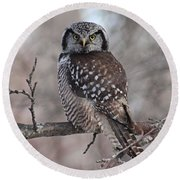 Northern Hawk Owl 9470 Round Beach Towel