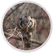 Northern Hawk Owl Having Lunch 9416 Round Beach Towel