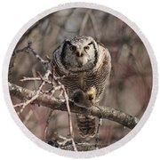 Northern Hawk Owl Having Lunch 9417 Round Beach Towel