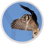 Northern Hawk Owl Round Beach Towel
