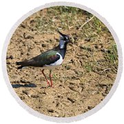 Northern Lapwing Round Beach Towel