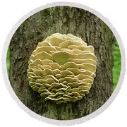 Northern Tooth Fungus Round Beach Towel