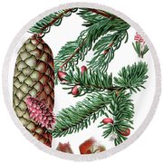 Norway Spruce, Pinus Abies Round Beach Towel