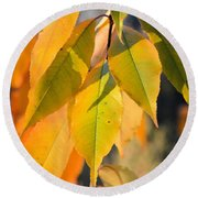 November Colors Round Beach Towel