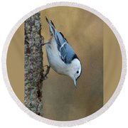 Nuthatch In Profile Round Beach Towel