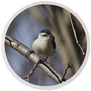 Nuthatch On Perch Round Beach Towel