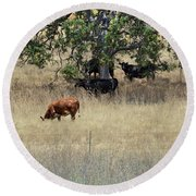 Oak Tree And The Cows Round Beach Towel