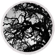 Oak Tree In Winter Detail - Amador County, California Round Beach Towel