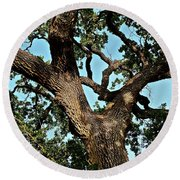 Oak Tree Two Round Beach Towel