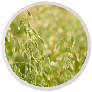 Oats Plants Detail Round Beach Towel