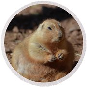 Obese Prairie Dog Sitting In A Pile Of Dirt Round Beach Towel