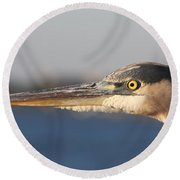 Observant Eye - Heron Portrait Round Beach Towel