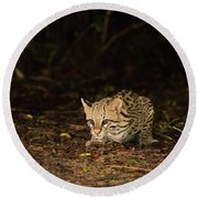 Ocelot Crouching At Night Looking For Food Round Beach Towel