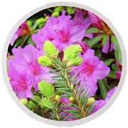 Office Art Pine Conifer Pink Azalea Flowers 38 Azaleas Giclee Art Prints Baslee Troutman Round Beach Towel