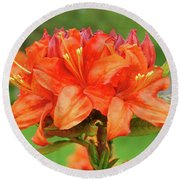 Office Art Prints Azaleas Botanical Landscape 11 Giclee Prints Baslee Troutman Round Beach Towel