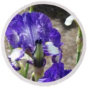Office Art Prints Irises Flowers 46 Iris Flower Giclee Prints Baslee Troutman Round Beach Towel